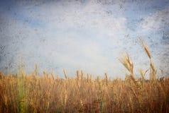Campo del trigo; estilo de la foto de la vendimia fotografía de archivo