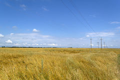 Campo del trigo maduro en Ucrania Fotos de archivo libres de regalías