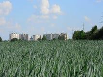 Campo del trigo verde contra la perspectiva de la ciudad metrajes