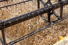 Campo del trigo visto de una máquina de la cosechadora en la acción durante la cosecha Imagen de archivo libre de regalías