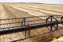 Campo del trigo visto de una máquina de la cosechadora en la acción durante la cosecha Fotografía de archivo