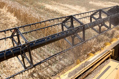 Campo del trigo visto de una máquina de la cosechadora en la acción durante la cosecha Imagenes de archivo