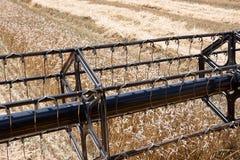 Campo del trigo visto de una máquina de la cosechadora en la acción durante la cosecha Imágenes de archivo libres de regalías