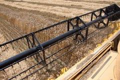 Campo del trigo visto de una máquina de la cosechadora en la acción durante la cosecha Foto de archivo libre de regalías