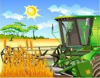 Campo del trigo y de la cosechadora Imagenes de archivo