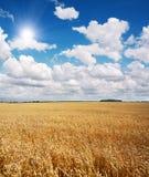 Campo del trigo y del cielo azul hermoso Foto de archivo