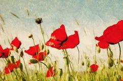 Campo del tulipán en la pared agrietada Foto de archivo libre de regalías