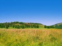 Campo del verano con los árboles en la colina Fotografía de archivo