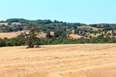 Campo del verano de Toscana, Italia Imagenes de archivo