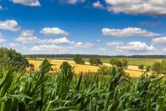 Campo del verano en República Checa con los campos amarillos Imagen de archivo libre de regalías