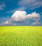Campo del verde amarillo y cielo azul Fotografía de archivo libre de regalías