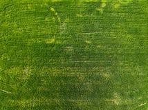 Campo del verde de la visión aérea en el campo Foto del abejón imagen de archivo