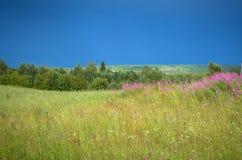 Campo del verde de pueblo con los arbustos y las flores salvajes después de una tormenta Imágenes de archivo libres de regalías