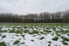 Campo del verde Nevado cerca del bosque oscuro Imagenes de archivo