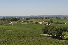 Campo del viñedo Fotos de archivo