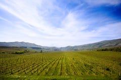 Campo del viñedo en Macedonia Imagenes de archivo