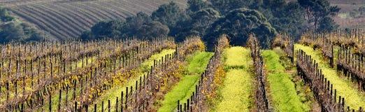 Campo del vino Fotografía de archivo