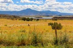 Campo del Wildflower cerca del lago en Colorado Imágenes de archivo libres de regalías
