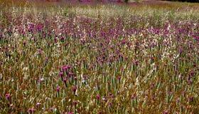 Campo del Wildflower en Provence Fotos de archivo libres de regalías