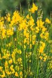 Campo delicato dei fiori Immagini Stock Libere da Diritti