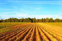 Campo dell'agricoltore Fotografia Stock