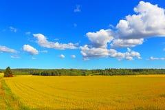 Campo dell'agricoltore del fondo del grano Fotografia Stock