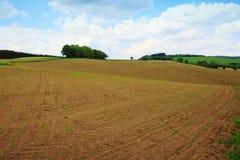 Campo dell'agricoltore di Brown sotto cielo blu Fotografia Stock