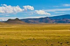 Campo dell'antilope Fotografie Stock Libere da Diritti