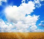 Campo dell'avena e paesaggio del cielo di estate Fotografie Stock Libere da Diritti