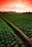 Campo dell'azienda agricola Immagine Stock