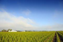 Campo dell'azienda agricola Fotografia Stock