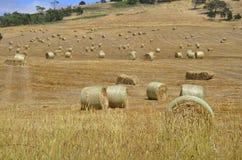 Campo dell'azienda agricola Fotografia Stock Libera da Diritti
