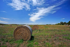 Campo dell'azienda agricola in Australia ad ovest Fotografie Stock