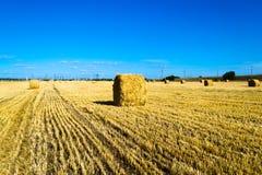 Campo dell'azienda agricola con le balle di fieno Fotografia Stock Libera da Diritti