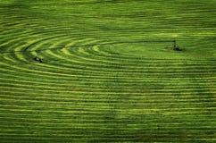 Campo dell'azienda agricola con lo spruzzatore di irrigazione del perno del cerchio Immagine Stock