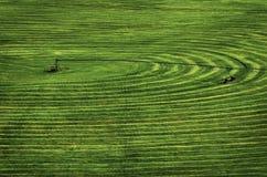 Campo dell'azienda agricola con lo spruzzatore di irrigazione del perno del cerchio Fotografia Stock