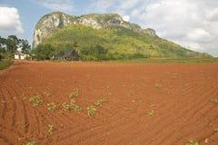Campo dell'azienda agricola con suolo rosso con le montagne del calcare nelle birre inglesi del ½ del ¿ di Valle de Viï, in Cuba  Fotografie Stock