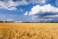 Campo dell'azienda agricola del frumento Immagini Stock