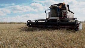 Campo dell'azienda agricola della cultura del cereale di agricoltura del raccolto della mietitrebbiatrice stock footage