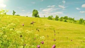 Campo dell'azienda agricola nel Kentucky video d archivio