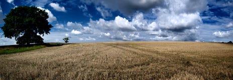 Campo dell'azienda agricola panoramico immagine stock libera da diritti