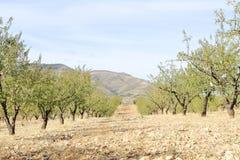 Campo dell'azienda agricola in primavera Immagini Stock