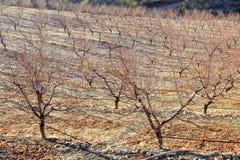 Campo dell'azienda agricola in primavera Immagini Stock Libere da Diritti