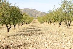 Campo dell'azienda agricola in primavera Fotografie Stock Libere da Diritti