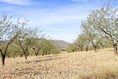 Campo dell'azienda agricola in primavera Immagine Stock Libera da Diritti
