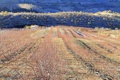 Campo dell'azienda agricola in primavera Fotografia Stock Libera da Diritti