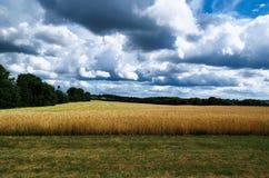 Campo dell'azienda agricola pronto per agricoltura che raccoglie con il cielo blu e le nuvole Fotografie Stock