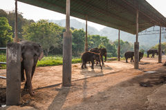 Campo dell'elefante Fotografia Stock