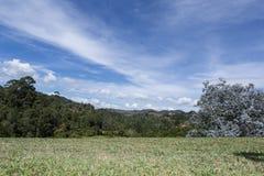 Campo dell'erba e della foresta della molla immagini stock
