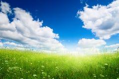Campo dell'erba fresca di estate immagini stock